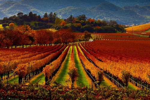 Napa Valley Vacations for Single Women