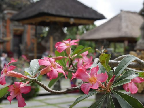 Bali flowers and temple. Article for Adventure vacations for singles.