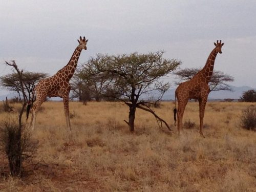 solo South Africa Safari tour