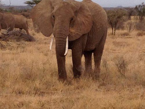 South Africa Safari trips