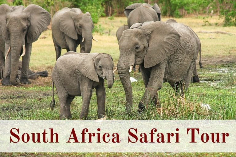 South Africa Safari Tour